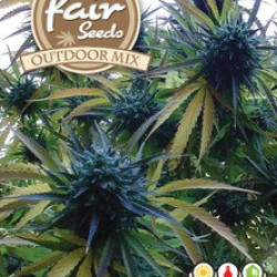 Outdoor MIX - 5ks autoflower semena konopí Fair Seeds