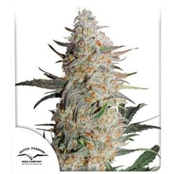 Jack 47 - Feminized Seeds 5 pcs Sweet Seeds