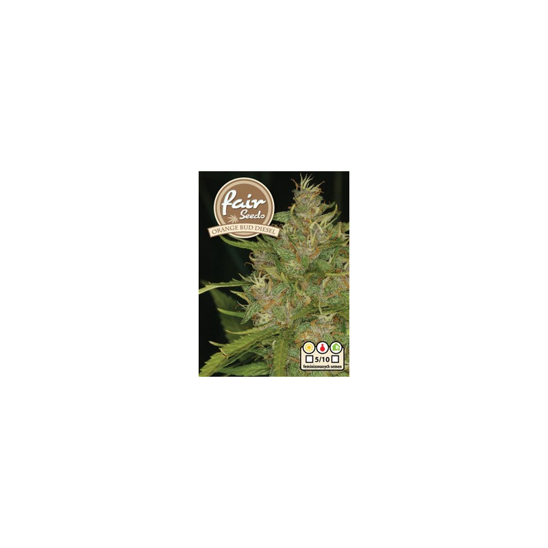 Orange Bud Diesel 5 feminizovaných semen Fair Seeds