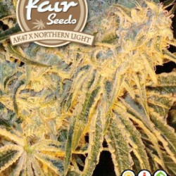 AK47 x Northern Light 5 feminizovaných semínek Fair Seeds