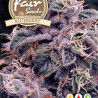 Car Blueberry - 5 nasion autoflower Fair Seeds