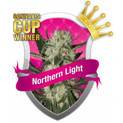 Northern Light 10 ks feminizované semienka Royal Queen Seeds